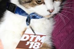 Max, der DTM-Kater_9819